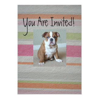 English Bulldog Puppy Invitations