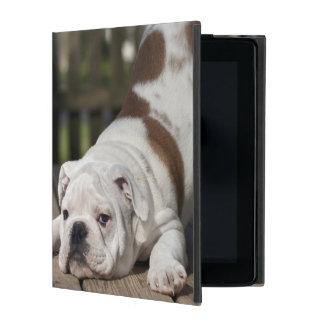 English Bulldog Puppy iPad Cover