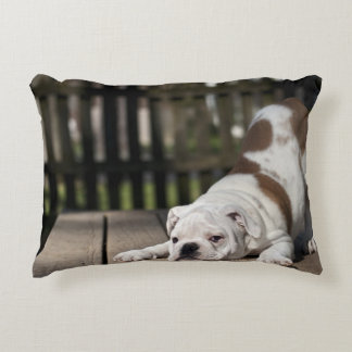 English bulldog puppy stretching down. accent pillow