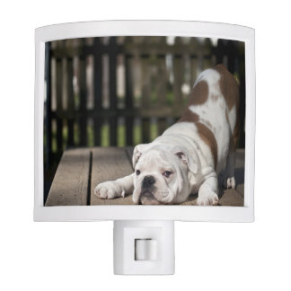 English bulldog puppy stretching down. night light