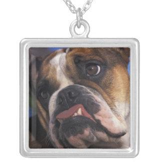 English Bulldog Silver Plated Necklace