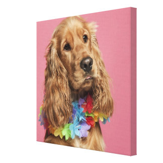 English Cocker Spaniel (10 months old) Canvas Print