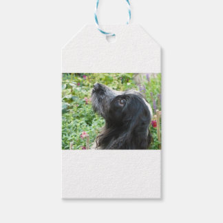 English Cocker Spaniel Pack Of Gift Tags