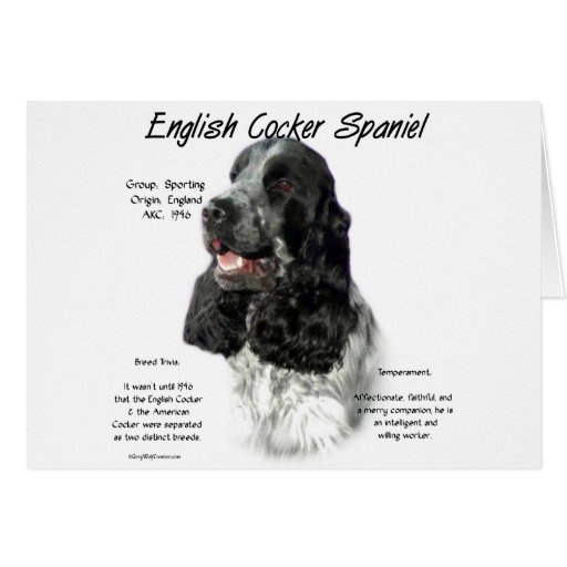 English Cocker Spaniel (parti) History Design Greeting Card