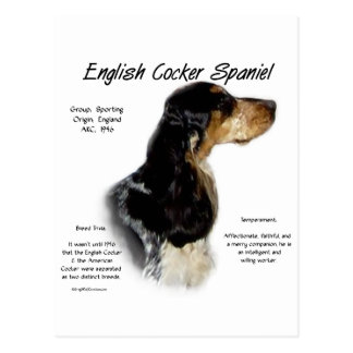 English Cocker Spaniel (parti/roan) History Design Post Cards