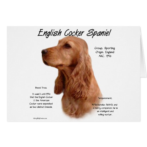 English Cocker Spaniel (red) History Design Greeting Card