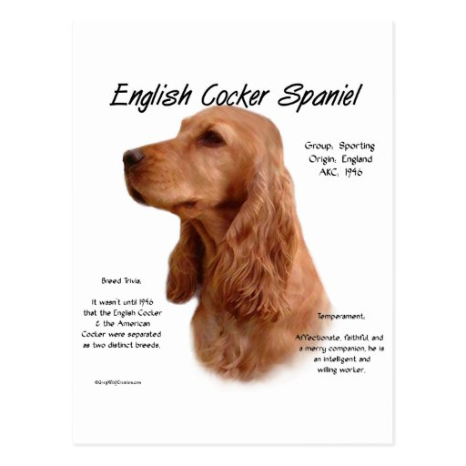 English Cocker Spaniel (red) History Design Postcards