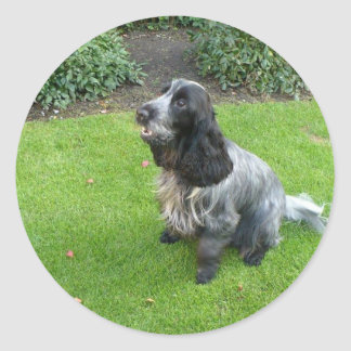 English Cocker Spaniel Round Sticker