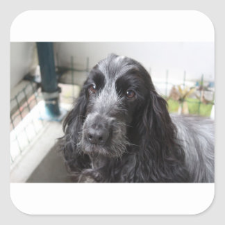 English Cocker Spaniel Square Sticker
