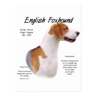 English Foxhound History Design Postcard