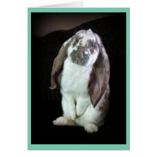 English Lop Rabbit Greeting Card