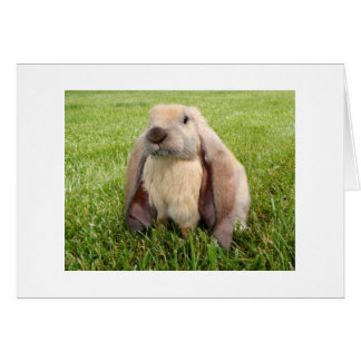 English Lop Rabbit Note Cards