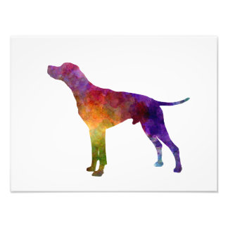English Pointer in watercolor Photo