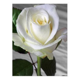 English Rose Card