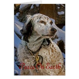 English Setter #2 Holiday Card