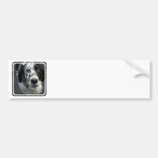 English Setter Dog Bumper Stickers