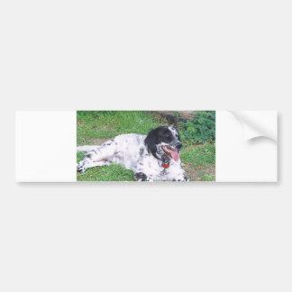 English Setter full laying Bumper Sticker