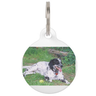 English Setter full laying Pet ID Tag