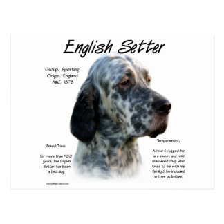 English Setter History Design Postcard