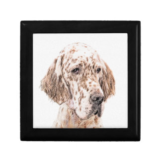 English Setter Orange Belton Painting Dog Art Gift Box