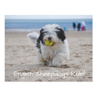 English Sheepdogs RULE Postcard! Postcard