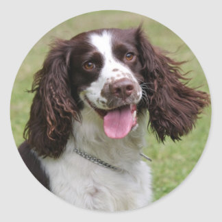 English Springer Spaniel dog beautiful photo, gift Classic Round Sticker