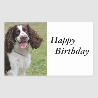 English Springer Spaniel dog beautiful photo Sticker