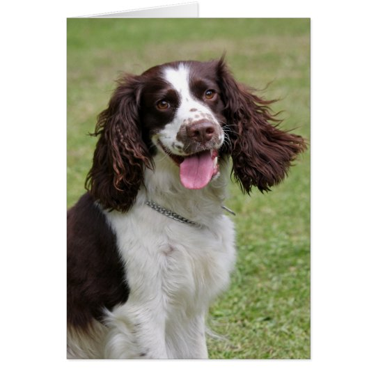 English Springer Spaniel dog blank note card