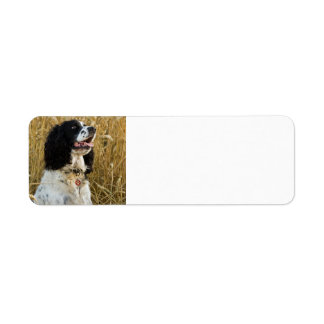 english springer spaniel in wheat.png return address label