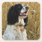english springer spaniel in wheat.png square paper coaster
