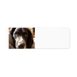 english springer spaniel liver.png return address label