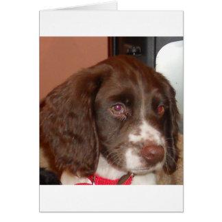 English_Springer_Spaniel lw puppy Card