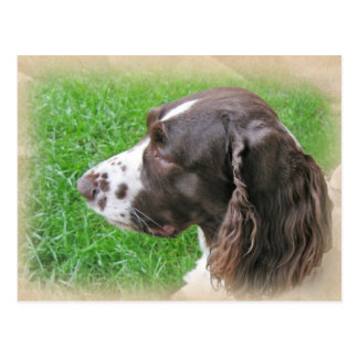 English Springer Spaniel Profile Postcards