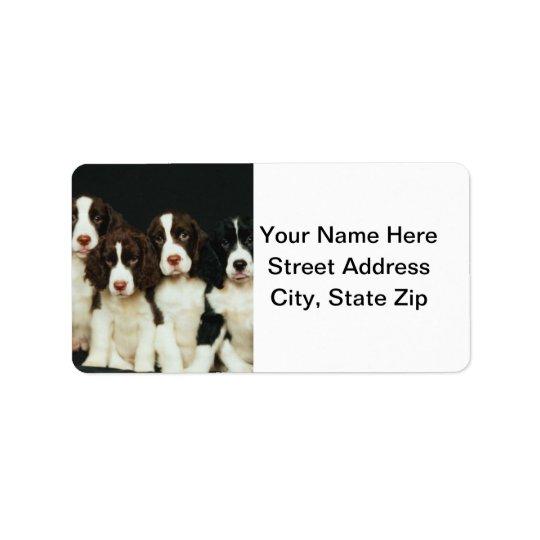English Springer Spaniel Puppies (2)