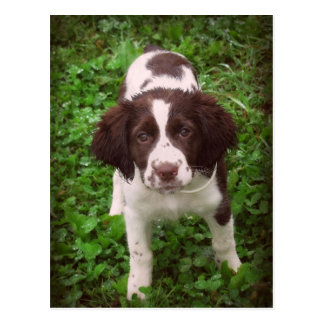 English Springer Spaniel Puppy Card