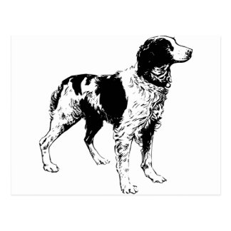 English Springer Spaniel  Sporting Pets Dogs Postcard