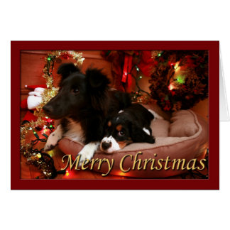 English Springer Spaniel, Springer Spaniel, Spanie Card