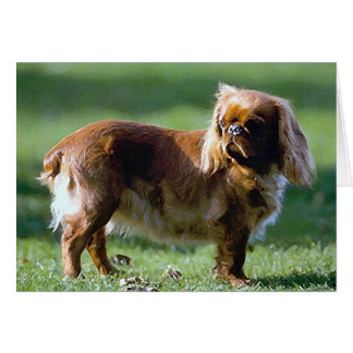 English Toy Spaniel Dog Blank Greeting Card