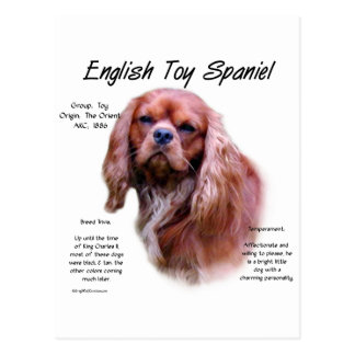 English Toy Spaniel (ruby) History Design Postcard