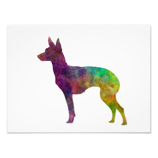 English Toy Terrier in watercolor Photo Print