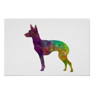 English Toy Terrier in watercolor Poster
