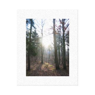 English Woodland Scene on canvas