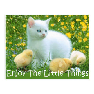 Enjoy The Little Things Cute Animals Post Cards