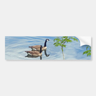 Enjoying a Swim Bumper Sticker