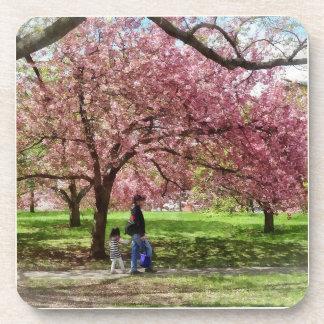 Enjoying the Cherry Trees Coaster