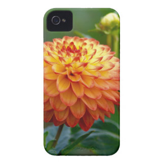 Enllighten Case-Mate iPhone 4 Case