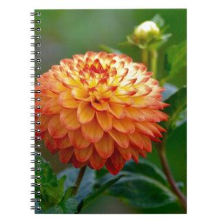 Enllighten Notebook