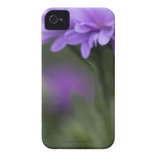 Enticement iPhone 4 Cases