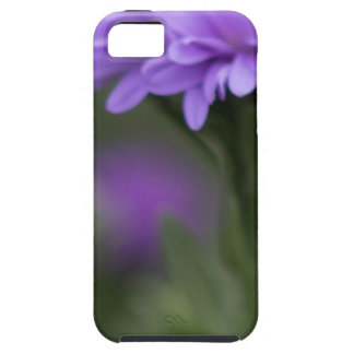 Enticement iPhone 5/5S Covers