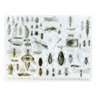 Entomology Insects Postcard